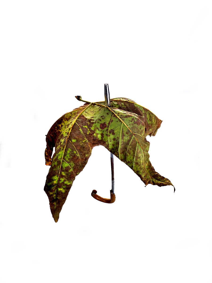 en-otono-llueve